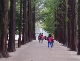 Seoul ~ Autumn 2013