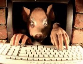 Jangan jadi babi plisss…