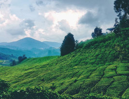 Weekend Getaway: Cameron Highlands