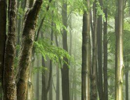 Selamatkan Hutan Simpan Kuala Langat Utara!